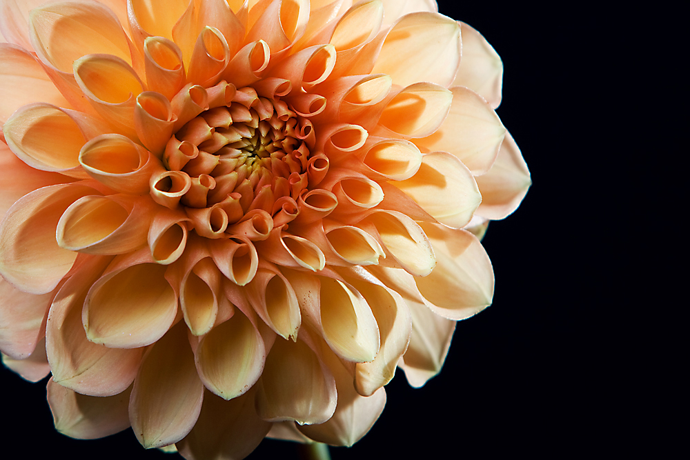 *Flowers**