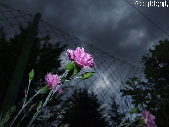 flowers and a storm