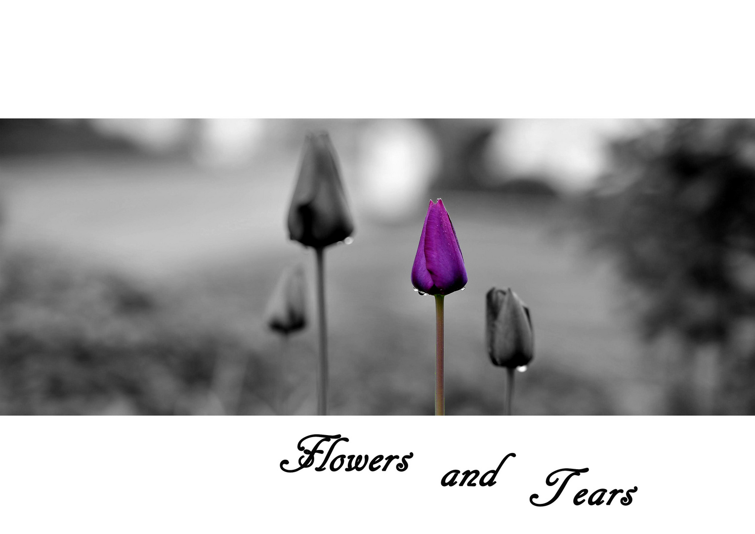 Flowers and Tears