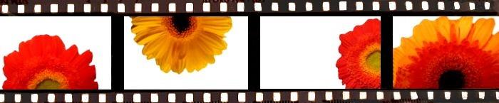 +++Flowers+++