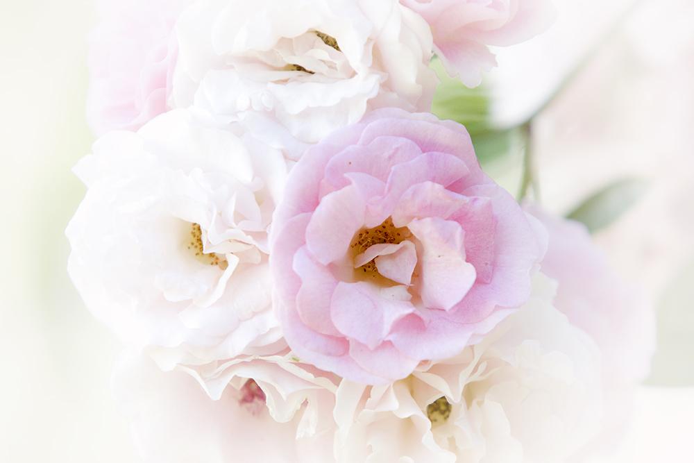 Flower's dream 2