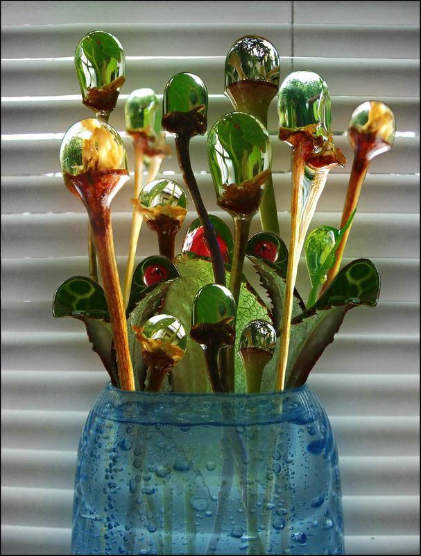 Flowers for Algenor