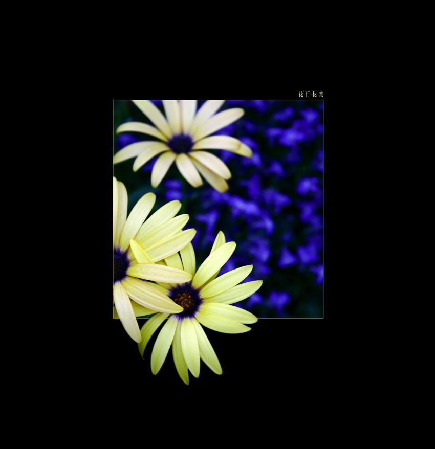 flowers form flowers do II