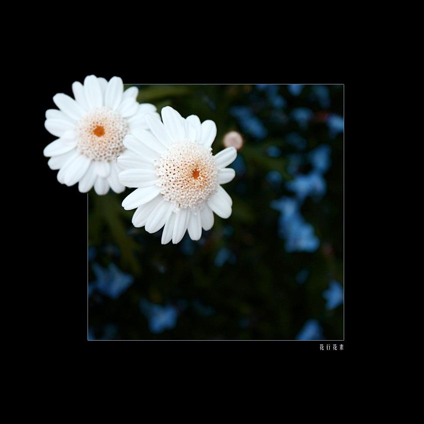 flowers form flowers do III