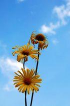 Flowers --- heaven