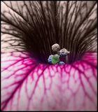 Flower's Ictus