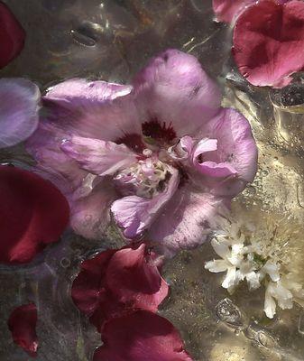 Flowers (II)