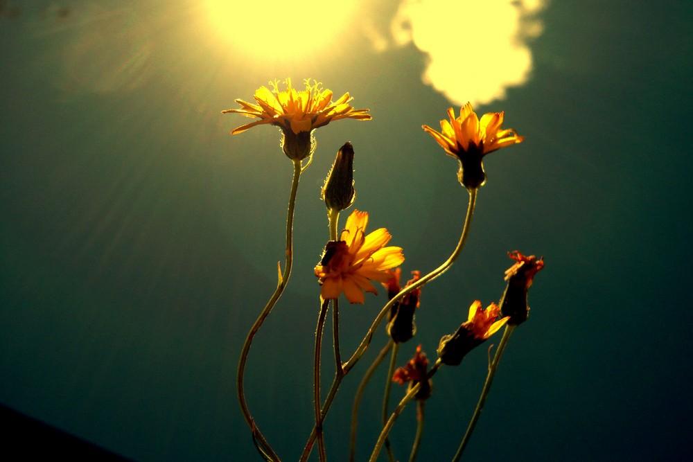 flowers in my garden II