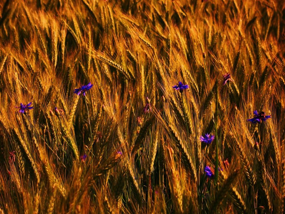 flowers in the evening blast