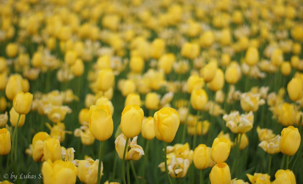 flowers #LGS
