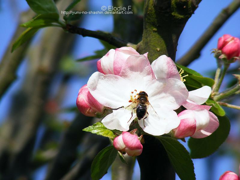 Flowers N°2.