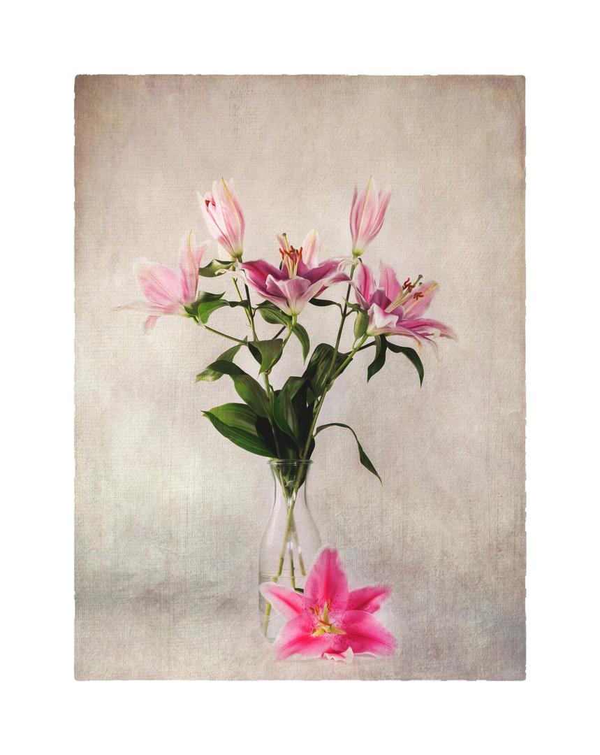 Flowers of Garden XIX