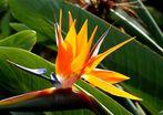 Flowers of MADEIRA I