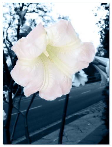 Flowers Power 01
