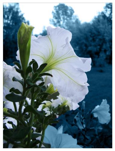 Flowers Power 02