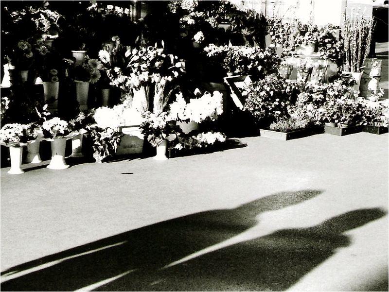 Flowers' promenade