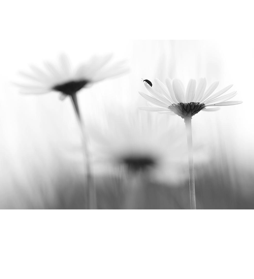 flower.sky