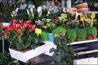 Flowers`s market