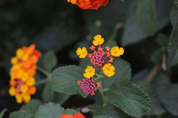 Flowerun