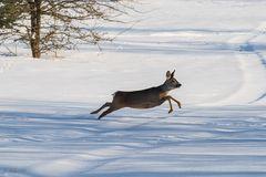 Flucht im Schnee