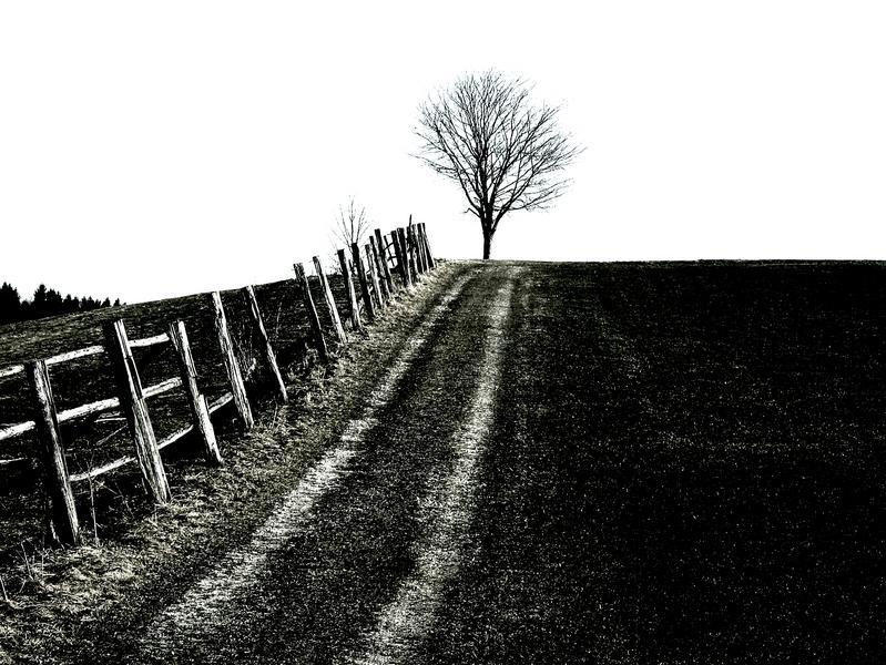 Fluchtpunkt Baum