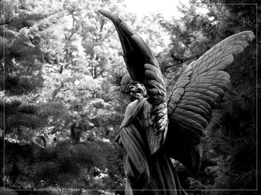 Flügel...
