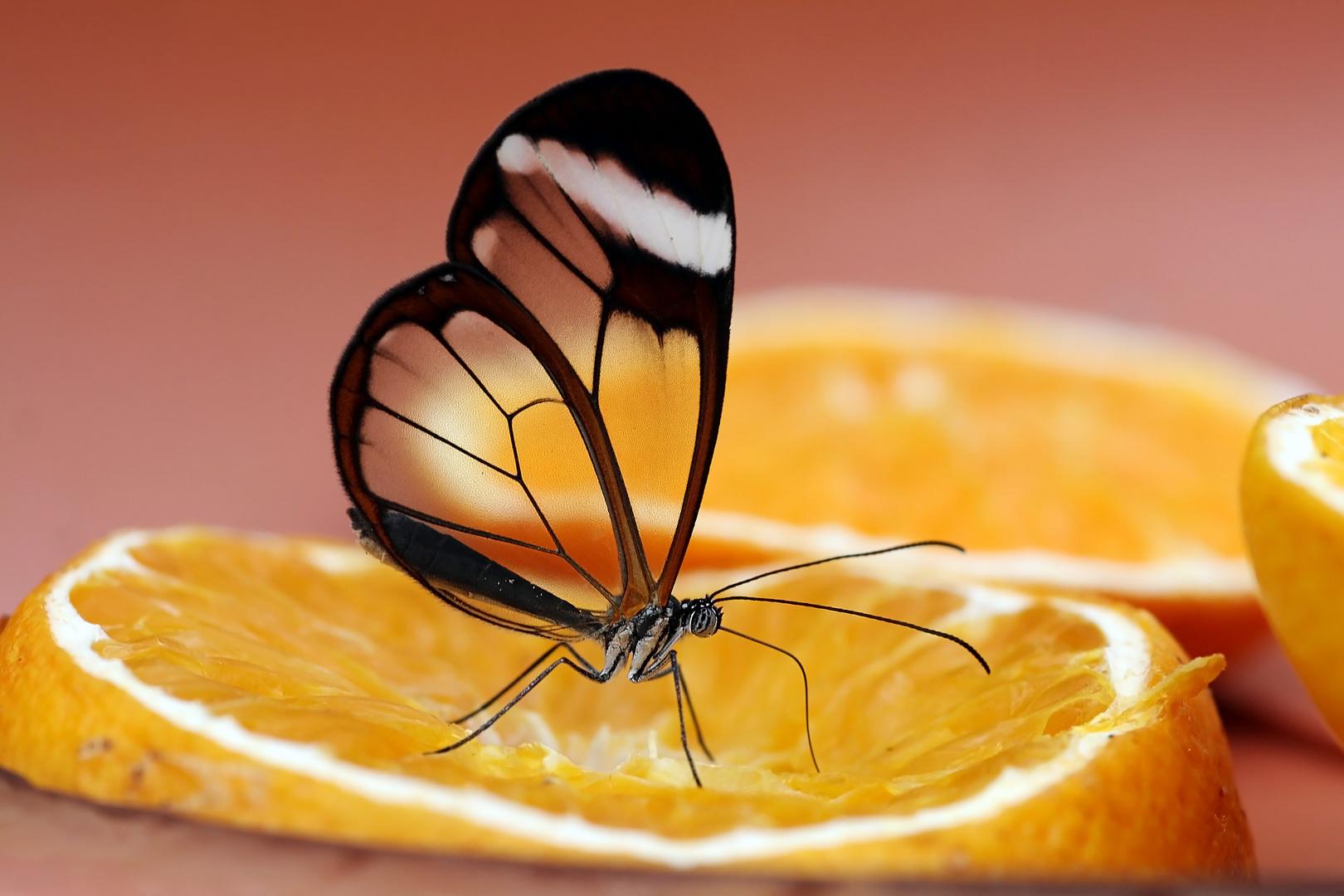 Flügel aus Glas