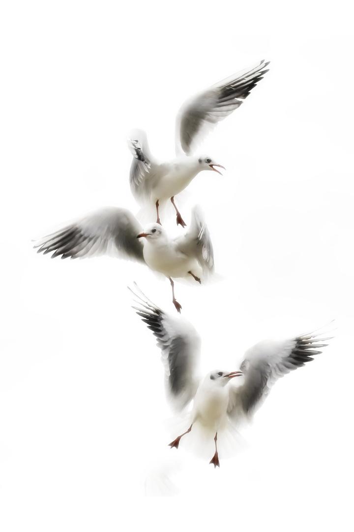 Flügel Ballett