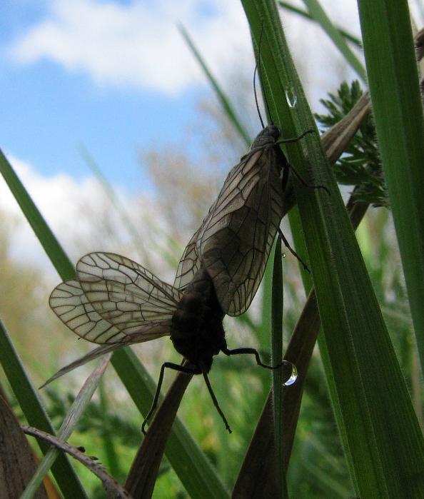 Flügel, Beine, Gras