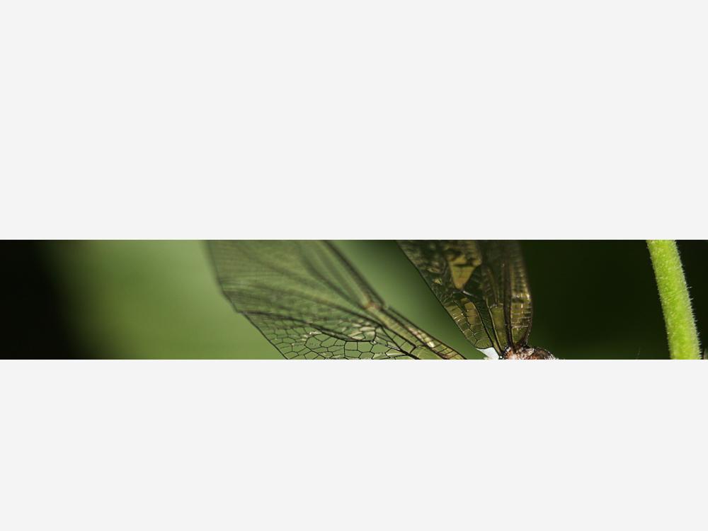 Flügel-Strip