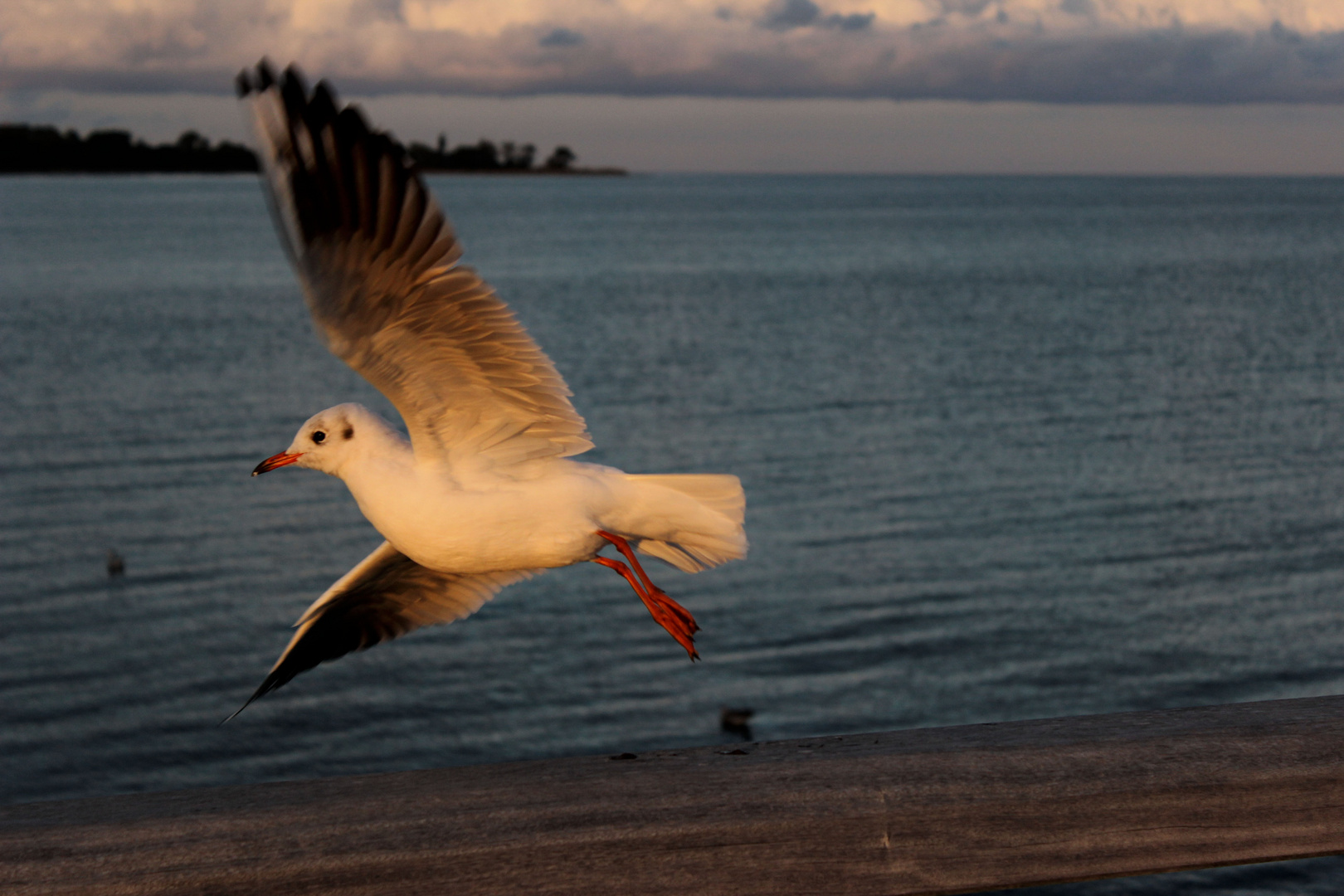 Flügelschlag der Freiheit