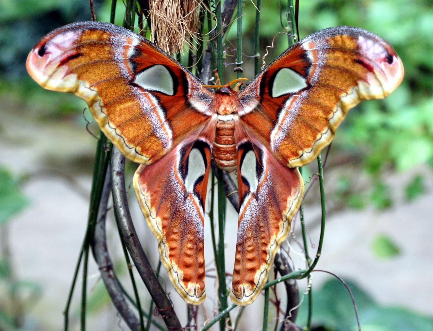 Flügelspannbreite