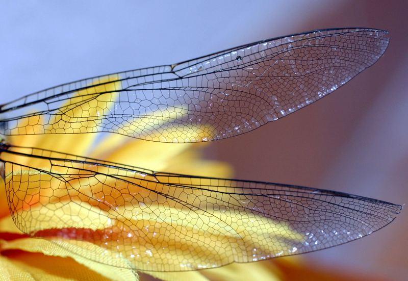 Flügelwunder