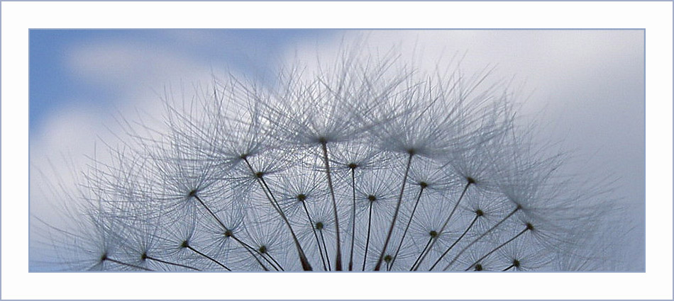 fluffy in the sky....