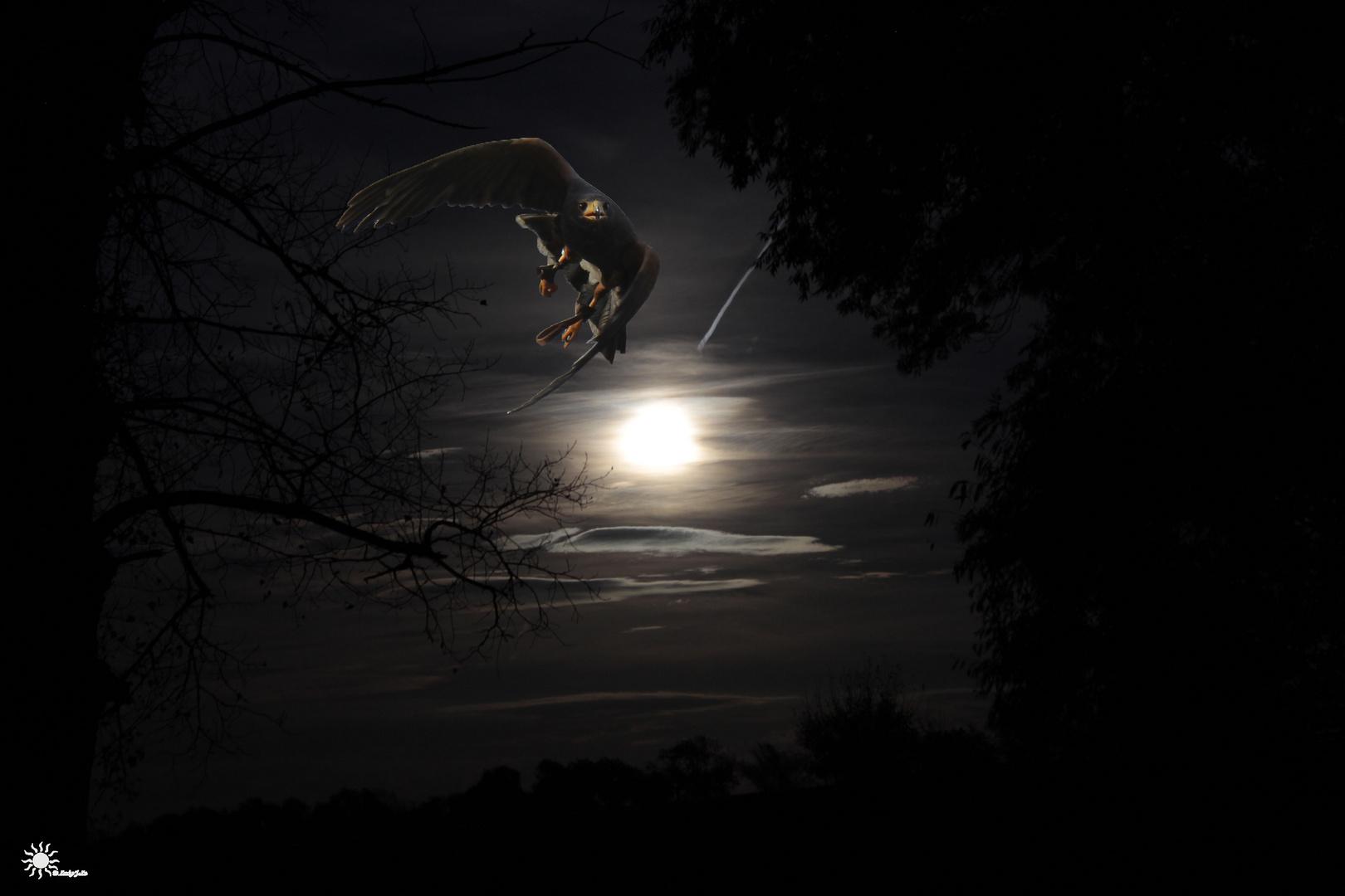 Flug durch die Nacht