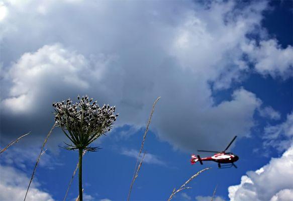 Flug Grass ?^
