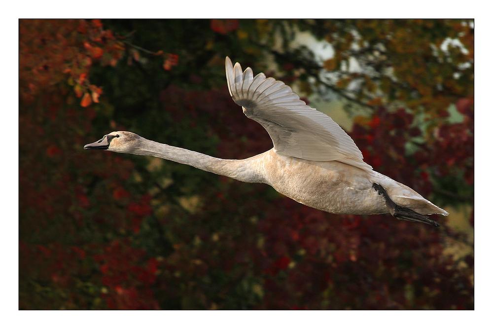 Flug in den Herbst