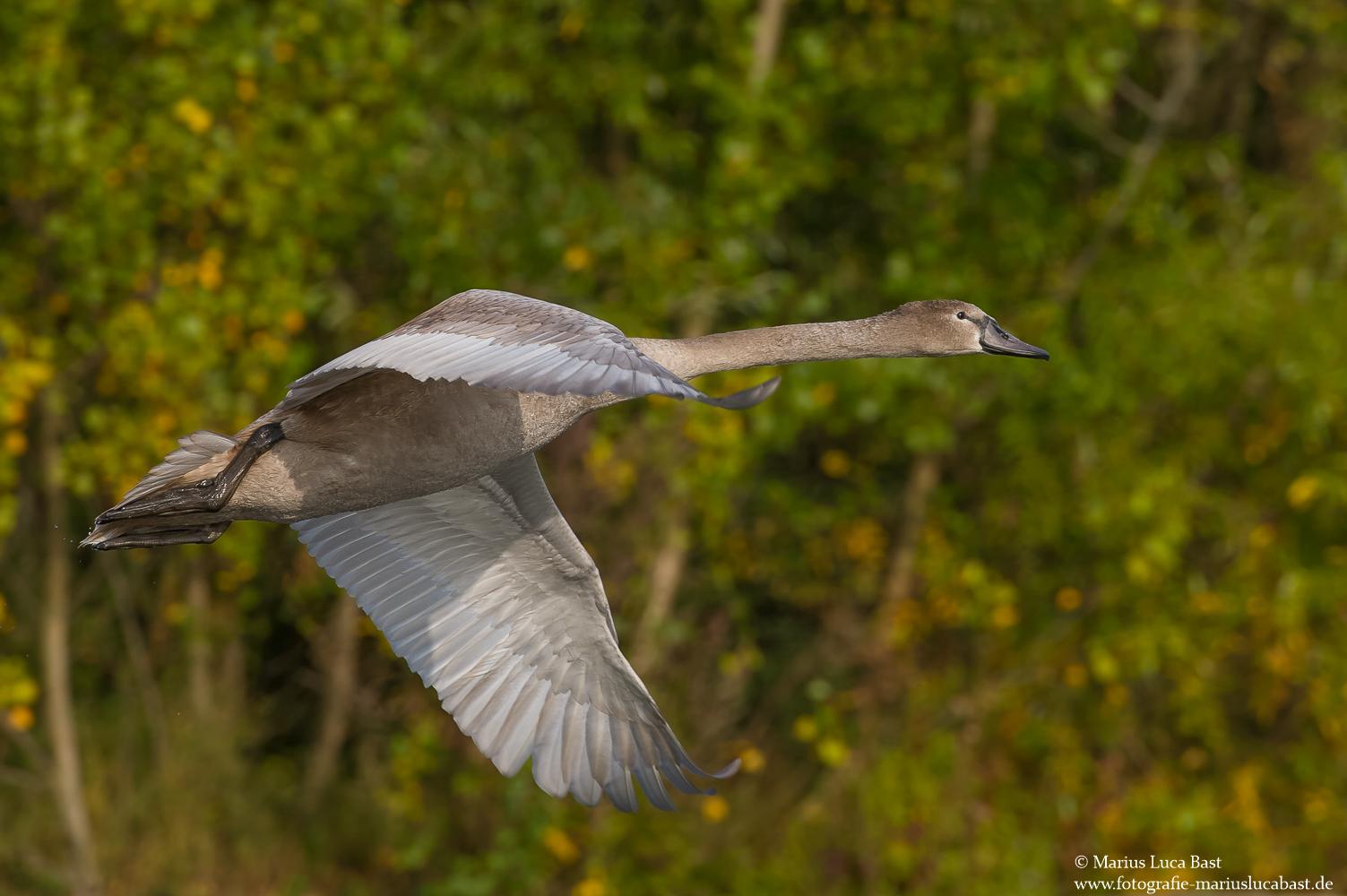 Flug in den Herbst..........