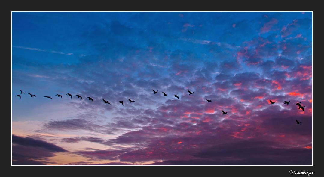 Flug in den Morgen