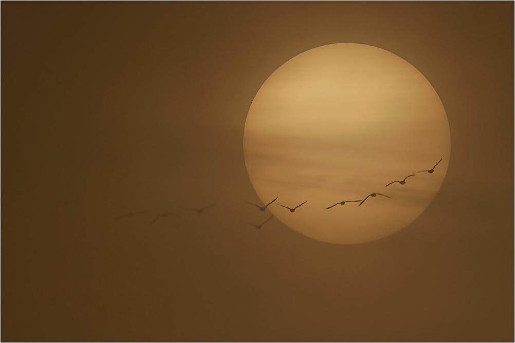 Flug in den Nebel