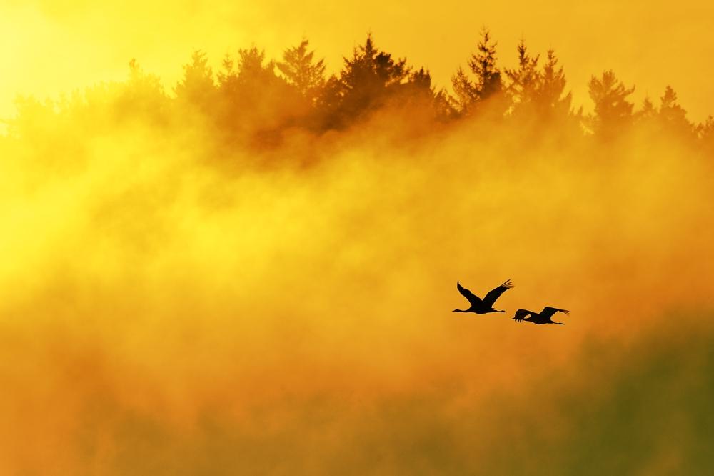 Flug in die Nebelwand