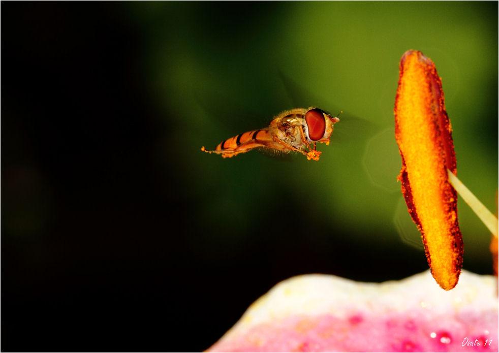 Flug ins Paradies