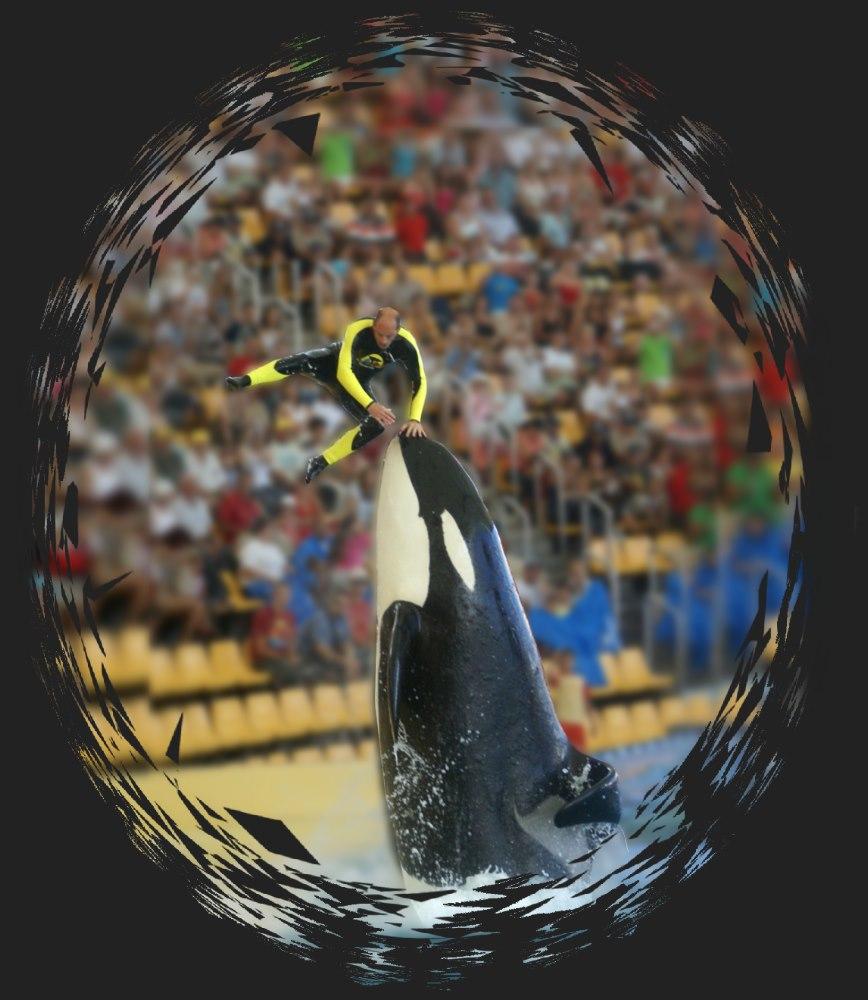 Flug mit dem Killerwal