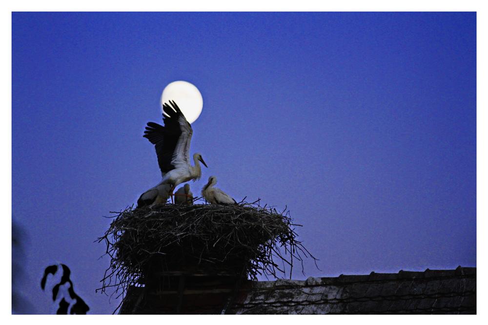 Flug Übung bei Mondschein