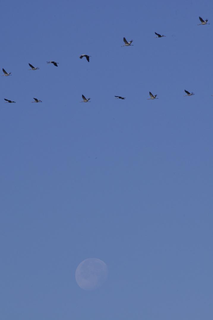 Flug zum Frühstück vor dem Mond