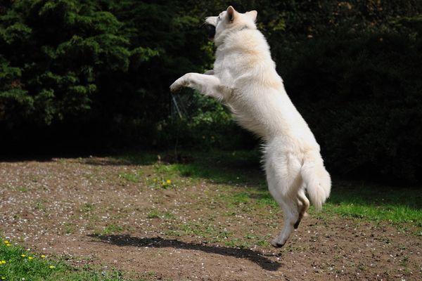 Flughund beim Ballspielen :-)