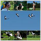 Flugschau im Vogelpark Walsrode.