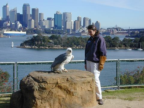 Flugshow im Taronga Zoo, Sydney