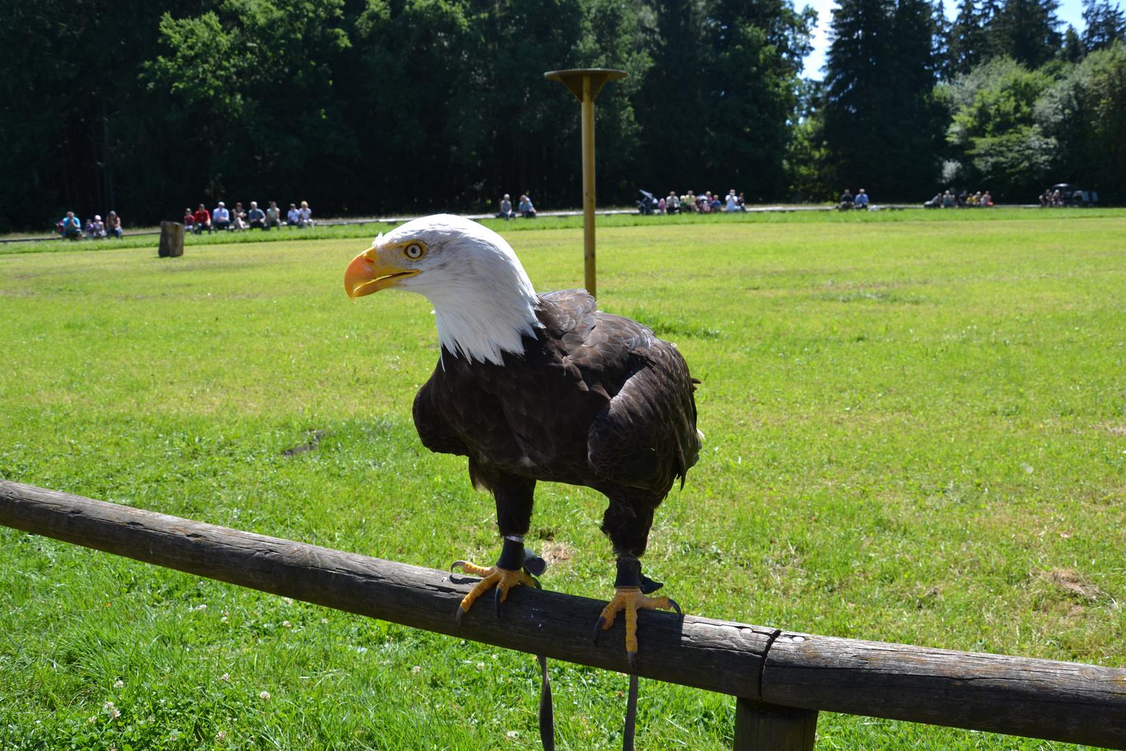 Flugshow Wildpark Poing