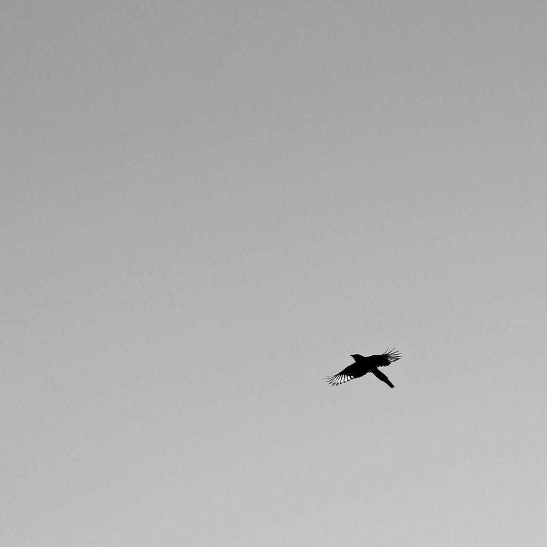 Flugsilhouetten 2: DIE ELSTER